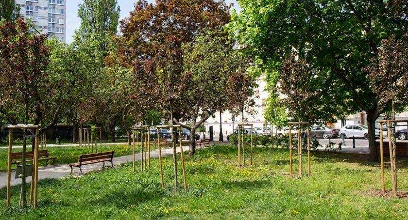 Zieleń - parki, Wymyśl miejsce posadzenie drzewa - zdjęcie, fotografia