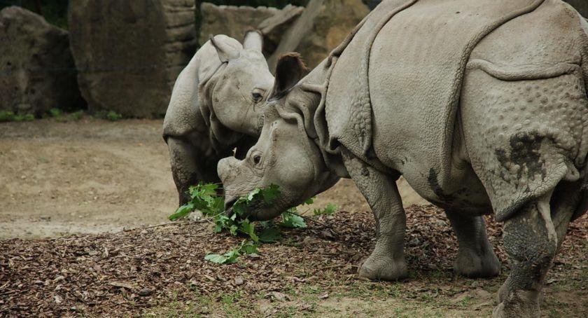 Zwierzęta, ZOOstaw dokarmiaj [ZDJĘCIA] - zdjęcie, fotografia