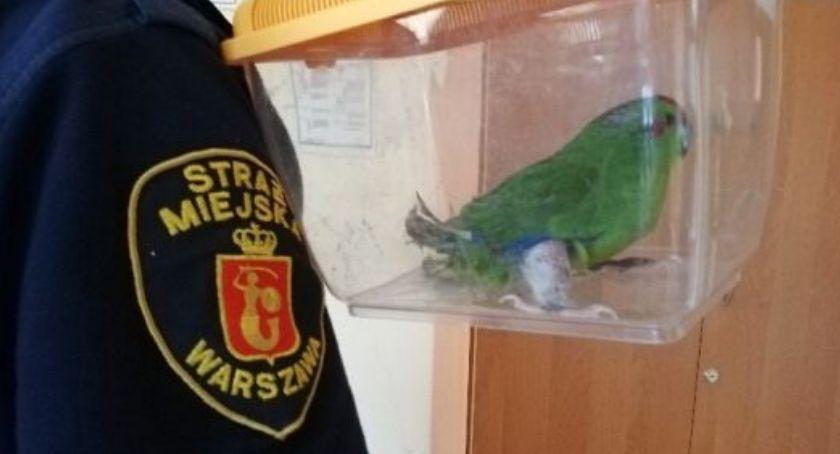 Zwierzęta, Chora papużka wleciała jednego mieszkań - zdjęcie, fotografia
