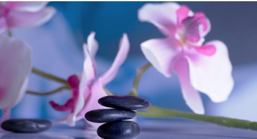 Wystawy, Niedługo Światowa Wystawa Orchidei Bonsai Sukulentów zapraszamy - zdjęcie, fotografia