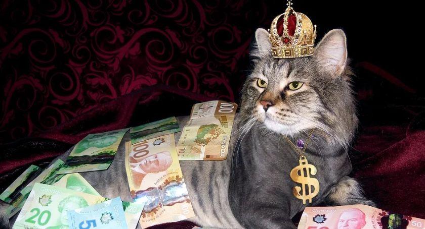 Handel i usługi, Pensja minimalna jeszcze wyższa wstępnie zakładano - zdjęcie, fotografia