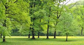 Stare nieużytki zastąpią nowe obszary zieleni