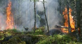 Pożar lasu pod Warszawą. Wysłano samolot gaśniczy