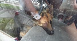 Uratowali zwierzęta z rozgrzanego auta. Akcja straży miejskiej w Al. Jerozolimskich