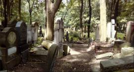 Wolontariusze porządkują zabytkowy Cmentarz Żydowski