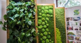 Pozytywna, zielona energia w Centrum Kreatywności. To trzeba zobaczyć!