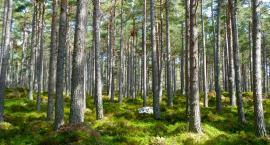 10 hektarów lasu na Targówku. Będzie dofinansowanie