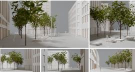 Plac Pięciu Rogów oazą spokoju dla pieszych. Zieleń zamiast betonu w centrum miasta