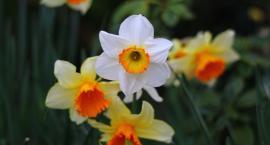 W Warszawie rozkwitną kwiaty warte ponad 300 tysięcy złotych