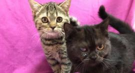 Malutkie kotki porzucone w toalecie urzędu dzielnicy