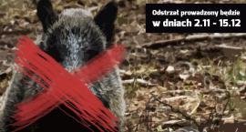 Rusza odstrzał dzików w Warszawie. Jest decyzja wojewody