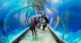 Oceanarium w Warszawie? Jest pomysł