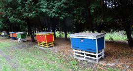 W Warszawie mieszka wielu pszczelarzy hobbystów