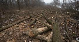 Stało się! Ruszyła masowa wycinka drzew przy Kanale Żerańskim