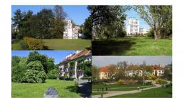 Bezpartyjni Samorządowcy zamierzają uchylić Statut Miasta w zakresie zarzadzania zielenią
