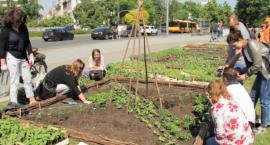 Brukselka, fasola i jarmuż - ogród warzywny na placu Na Rozdrożu