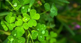 Warszawa na zielono. Światowy Dzień Środowiska