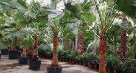 Kilkaset palm w drodze do Suntago Wodny Świat