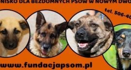 Schronisko w Nowym Dworze Mazowieckim potrzebuje naszej pomocy