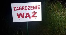 Kolejny dzień poszukiwań wielkiego węża. Jest w gminie Karczew? [ZDJĘCIA]