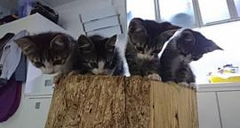 Bolek, Lolek, Tola i Lola szukają domu