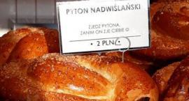 Zjedz pytona zanim on zje ciebie czyli chałka Pyton Nadwiślański