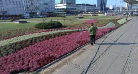 Warszawa w jesiennych kwiatach. Jest pięknie