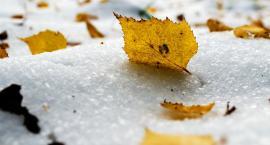 Koniec złotej, polskiej jesieni. Pora zmieniać opony w samochodach