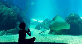 Oceanarium, wybieg afrykański - imponujące plany stołecznego zoo