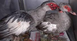Wyrzucone ptaki trafiły do Ptasiego Azylu