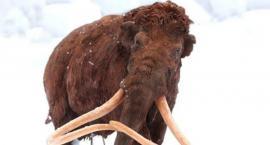 Mamut czy słoń leśny - szczątki znalezione na budowie metra [ZDJĘCIA]