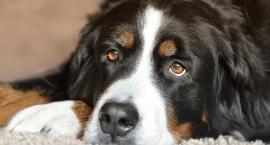 Rekord Na Plauchu - coraz mniej psów, więcej adopcji