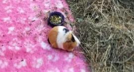 Chore i zaniedbane zwierzęta w minizoo