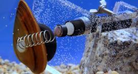 Wiecie, że... małże pracują dla Wodociągów Warszawskich? To one sprawdzają stan wody