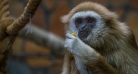 Dzisiaj jest Dzień Misji Ogrodów Zoologicznych!