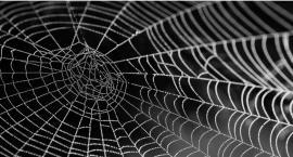 Spider-man byłby zachwycony! Zapraszamy do świata pająków w PKiN.