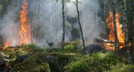 Pożary w podwarszawskich lasach - trzeba uważać.