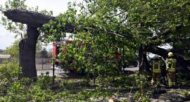 Dzisiaj burze. Nie zostawiajmy aut przy drzewach, bo tak to się może skończyć...[ZDJĘCIA]