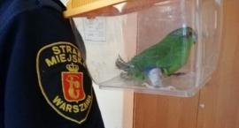 Chora papużka wleciała do jednego z mieszkań