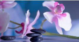 Niedługo Światowa Wystawa Orchidei, Bonsai i Sukulentów - zapraszamy
