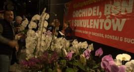 Wystawa Orchidei, Bonsai i Sukulentów w Global Expo [ZDJĘCIA]
