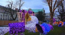 Iluminacja świąteczna i inne atrakcje - już od 7 grudnia!