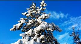 Wraca zima: w przyszłym tygodniu opady śniegu