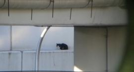 Bezbronny kotek został uratowany spod wiaduktu