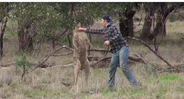 Boks z kangurem [wideo]