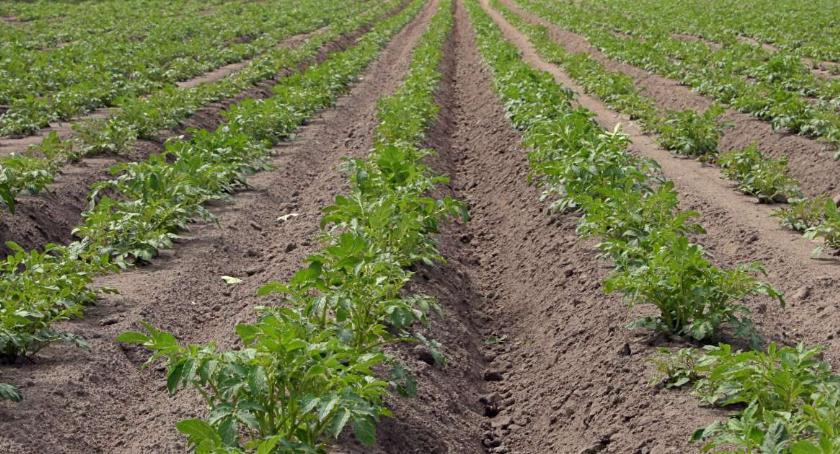 Rolnictwo, Pomoc rolnikom przymrozkach - zdjęcie, fotografia
