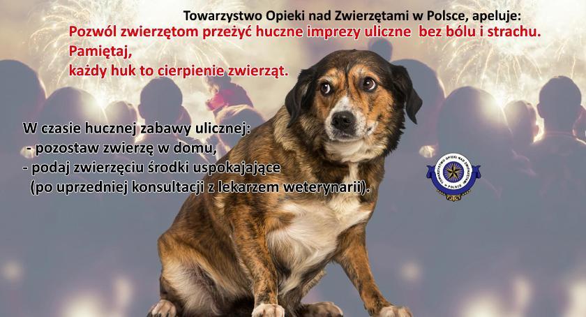 Zwierzęta, zabezpieczenie zwierząt domowych sylwestrową - zdjęcie, fotografia