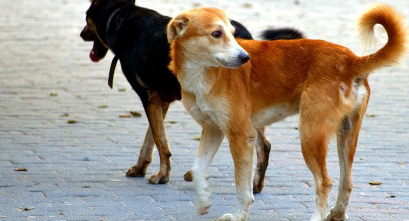 Zwierzęta, bezdomnymi zwierzętami Otwocku - zdjęcie, fotografia