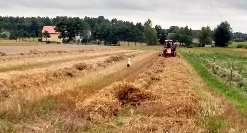 Rolnictwo, Wiązowna Szkolenie rolników składania wniosków dopłaty przez internet - zdjęcie, fotografia