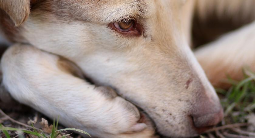Zwierzęta, Gdzie zgłosić bezdomne zwierzę - zdjęcie, fotografia
